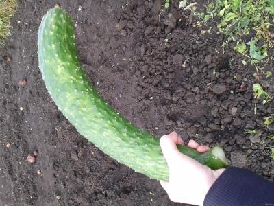 Какие бывают формы пениса