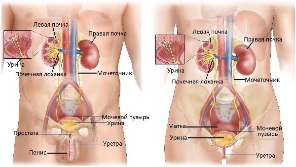 Болит мочевой пузырь у ребенка лечение