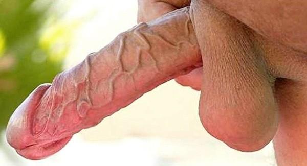 жилистый пенис