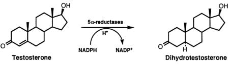 DHT – дигидротестостерон